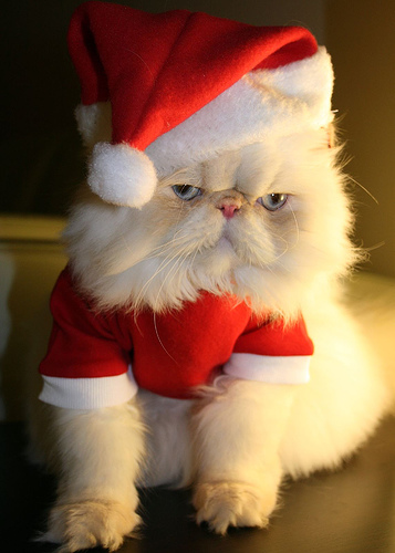 Happy Holidays Santa Cat Cheshire Cat Clinic, the premier provider of feline-exclusive veterinary care in San Diego, California