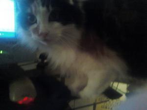 My Beautiful Cat, Alexa