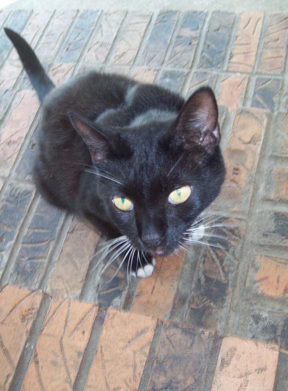 Hannah - Our Precious Cat