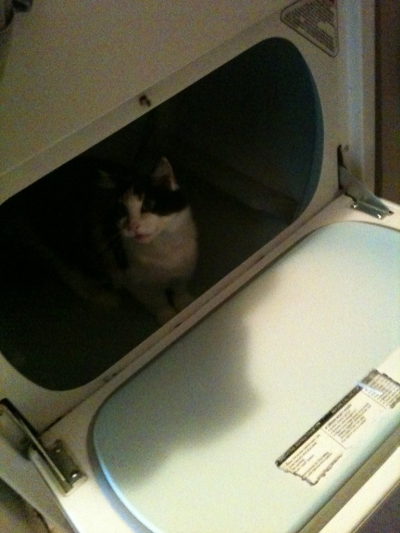 Alexa inspecting the Dryer