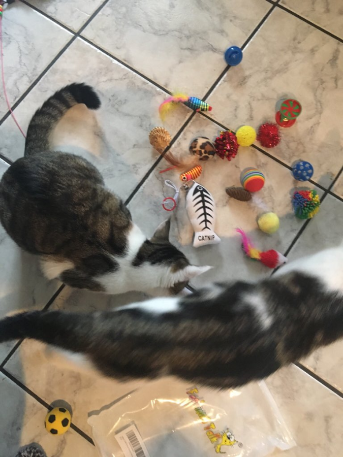 Cats with Toys