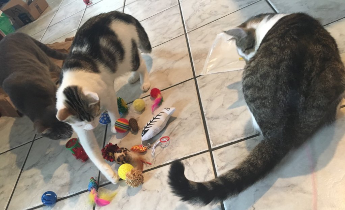 Delilah, Dokkie, and Huck with Toys