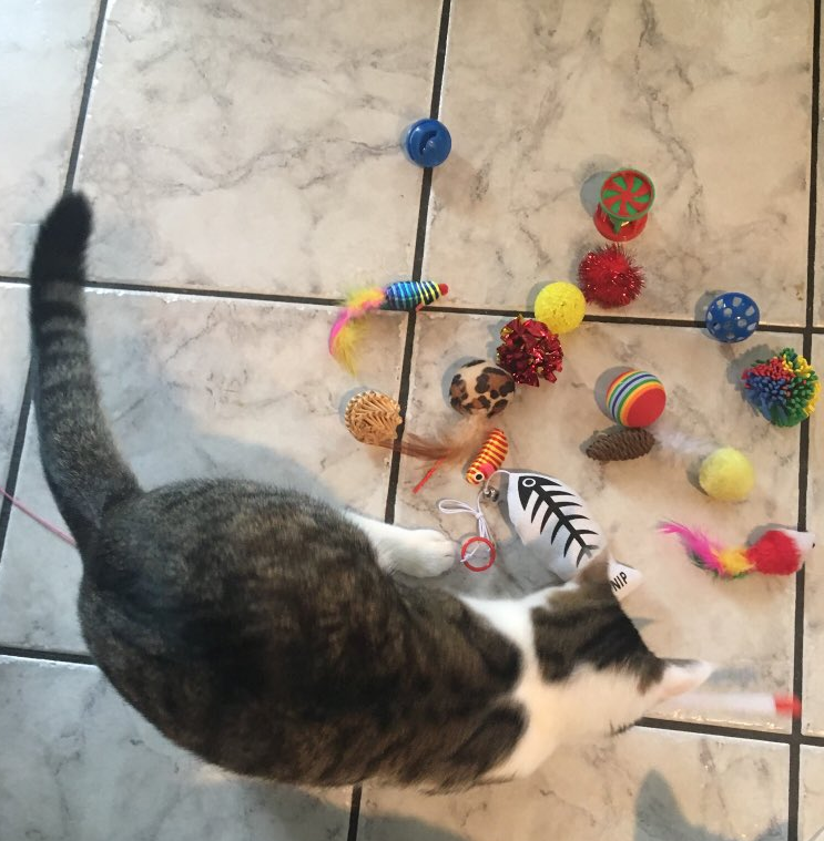 Dokkie and Cat Toys