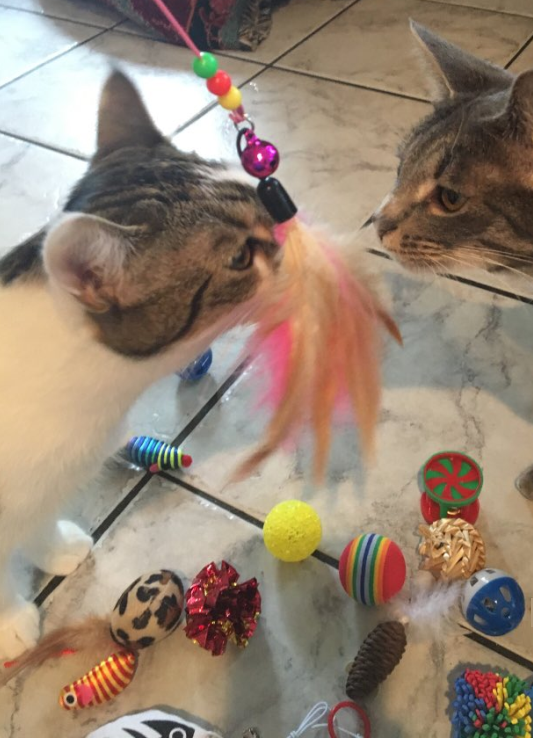 Dokkie and Delilah with Cat Toys